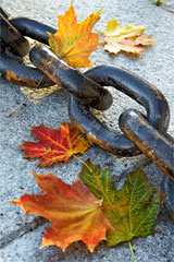 Links of a chain strung through maple leaves